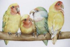 Porzellanmalen Lotti Haerdi  Vogel Papageien